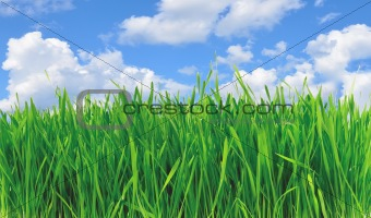 Green grass over perfect blue sky
