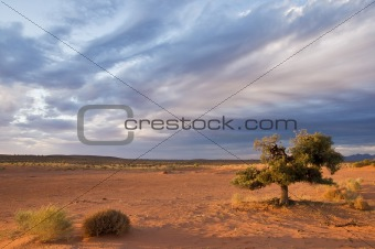 Alone tree in desert