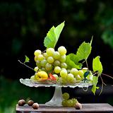 autumnal grapes
