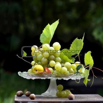 autumnal grapes