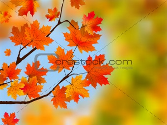Red maple tree leaves against blue sky.