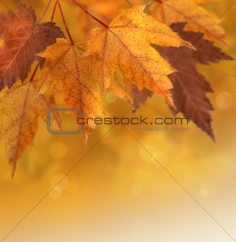 Autumn leaves with shallow focus background