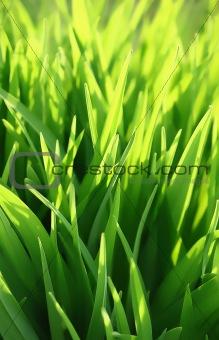 green grass and sunlight