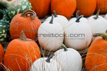 Close up of white and orange pumpkins