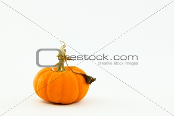 Small orange pumpkin with whimsical, curly stem and leaf