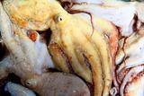Octopus catch pattern from mediterranean sea