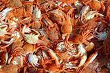 Mediterranean red crab pattern seafood texture
