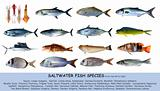 Fish species saltwater clasification isolated on white