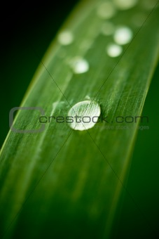 Dew drops on grass leaf