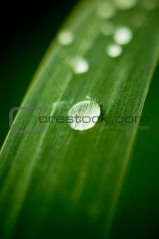 Dew drops on grass leaf