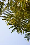 Fern foliage against a blue sky