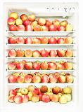 Refrigerator with several apples