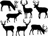 deers