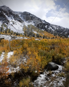 Autumn Aspens on Mountain