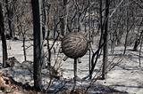sphere in burned forest