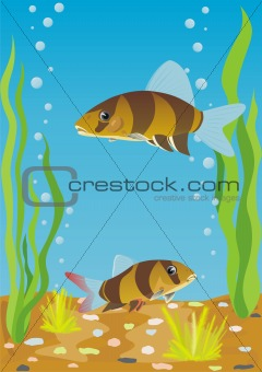 Aquarium fishes
