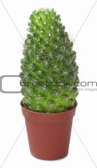 Small cactus in brown pot
