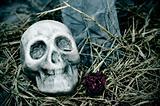 Halloween's skull