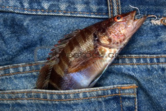 Small fish in a jeans pocket.