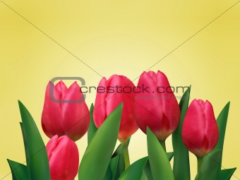 Bunch of tulip flowers on the table.