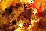Autumn background.