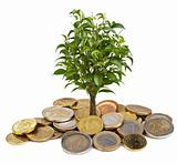 tree and coins isolated