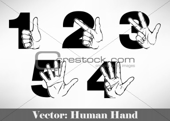 Counting Hands from one to five.