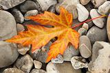 Orange Fallen Leaf on stones