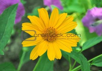 Beautiful orange flower in green summer grass