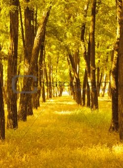 Footpath in beautiful autumn forest
