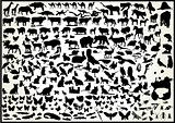 Animal Vector Collection