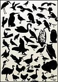BIRD - collection of bird silhouette - vector