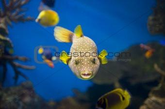 Fish macro