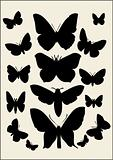 Butterfly - vector collection