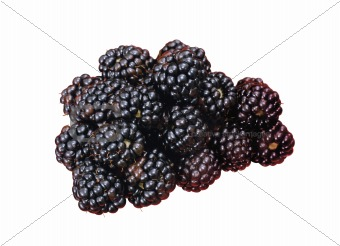 blackberry isolated on a white background