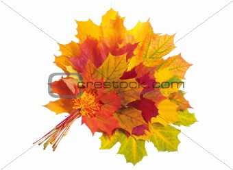 Beautiful autumn maple leaves isolated on white