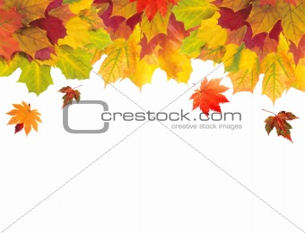 Autumn card of colored leaves over white