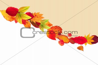 autumn card with colorful leaves
