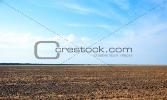 agricultural field and perfect blue sky