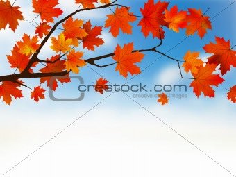 Autumn colored leaf on blue sky.