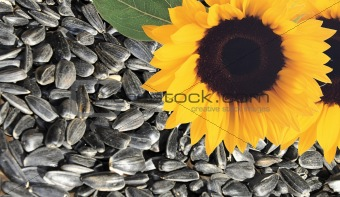 background with flower sunflower and seeds