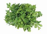 bunch fresh parsley on white background