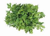 bunch fresh parsley on white background