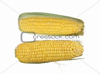 Tasty corn isolated on white background