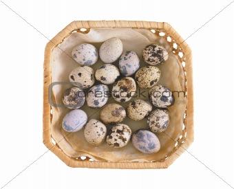 Group of spotted quail eggs in the plate isolated on white