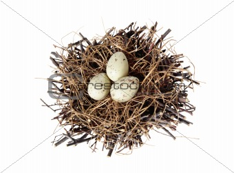Group of quail spotted eggs in bird nest isolated on white
