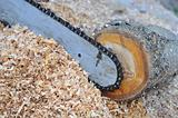 The chainsaw blade cutting the log of wood