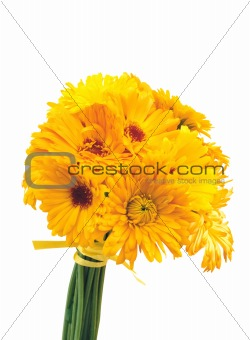 beautiful bouquet of yellow chrysanthemum flowers isolated on wh