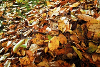Autumn leaves in the garden
