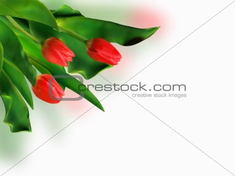 Bouquet of spring red tulips.